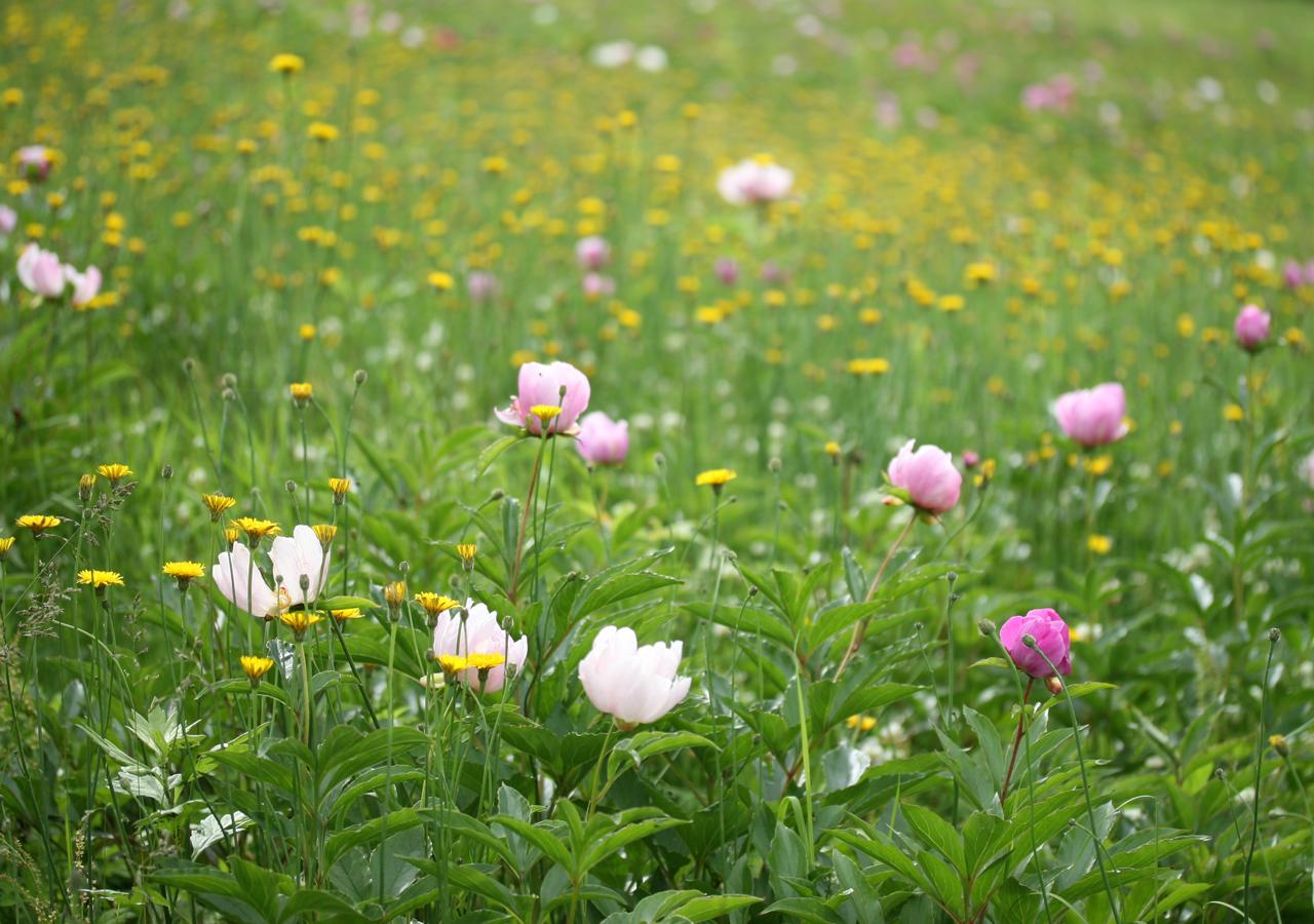 Green field Blog